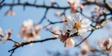 Квітень вирішив схаменутися: синоптик розповіла, коли в Україні потеплішає