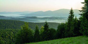На охорону лісів Коломийщини виділили понад 100 тисяч гривень