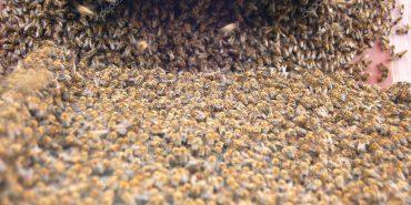 Рій бджіл напав на жінку на Коломийщині, врятували пожежники. ВІДЕО