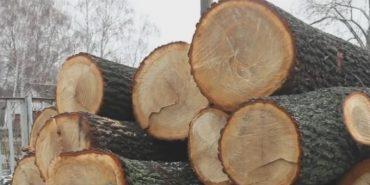 За вирубку 15 дубів мешканець Коломиї сплатить майже 114 тисяч гривень