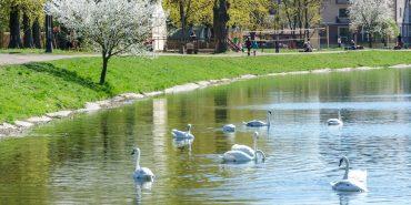 Анонс цікавих подій у Коломиї та районі на вихідні з 5 по 9 травня