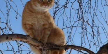 На Коломийщині рятувальники знімали з 20-метрового дерева кота