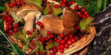 Щороку прикарпатці продають грибів та ягід на 100 мільйонів