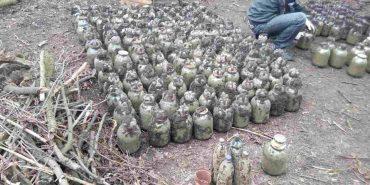 Коломийський суд розглядає справу прикарпатця, який для виготовлення наркотичного засобу вирощував коноплю
