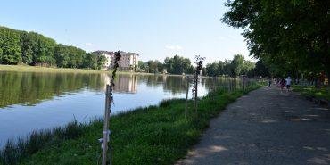 На міському озері у Коломиї невідомі пошкодили 30 сакур. ФОТО