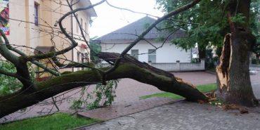 У Коломиї на вулиці Січових Стрільців впало дерево. ФОТО