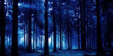 На Франківщині рятувальники цілу ніч шукали жінку, яка заблукала у лісі
