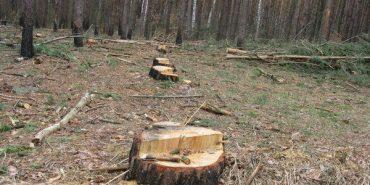 На Прикарпатті нещадно вирубують ліси. ВІДЕО