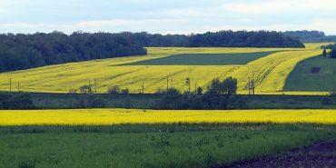 Поліція відкрила кримінальне провадження щодо фірми, яка обробляє поля на Коломийщині