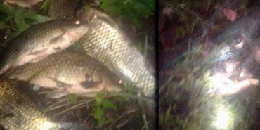 На Коломийщині спіймали браконьєрів, які ловили сітками рибу