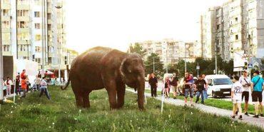 Мережу шокувало фото з слоном на автомийці у Франківську. ФОТО