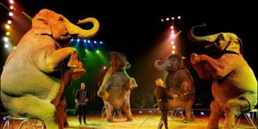На території одного з населених пунктів Прикарпаття заборонили цирки з тваринами