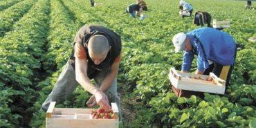 Заробітки українців у Польщі зросли на третину