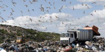 Прокуратура не може знайти, хто скидав сміття на Прикарпатті