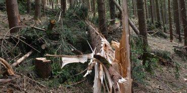 Буревій пошкодив у Коломийському лісгоспі 25 гектарів лісу. ФОТО