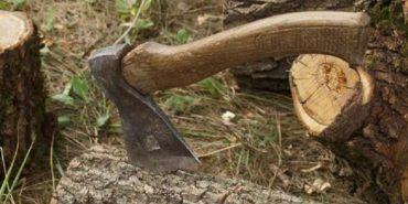 У парку на Прикарпатті вирубали дерев майже на 500 тис. грн