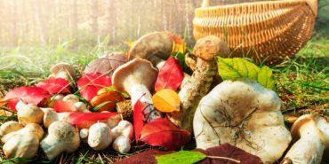 У Карпатах 30-річний турист отруївся грибами