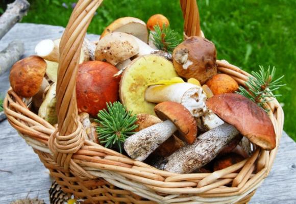 Цього року в Україні понад 170 людей отруїлося грибами, 11 з них померло
