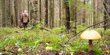 На Франківщині другу добу шукають заблукалих грибників