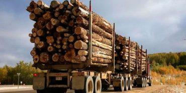 600 тисяч гривень за незаконні рубки заплатить Кутський лісгосп