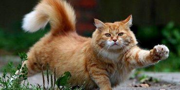 Вченим вдалося розшифрувати міміку котів
