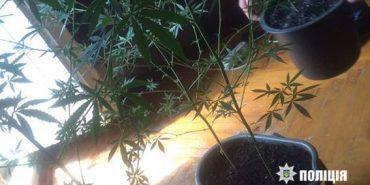 Прикарпатець вирощував коноплю на балконі. ФОТО