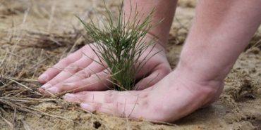 Від початку року у Карпатах відновили 4 тисячі гектарів лісу