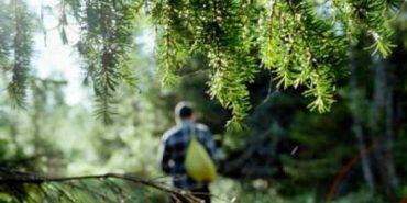 На Прикарпатті знайшли грибника, який три дні блукав лісом
