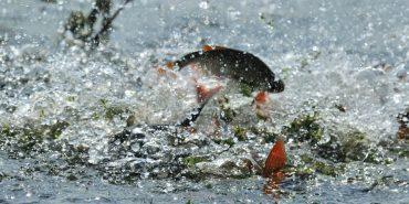 119 разів порушили заборону на вилов риби під час нересту на Прикарпатті