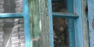 На Прикарпатті дві сестри два роки не виходять з дому: природні потреби справляють просто у хаті. ФОТО