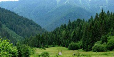 Карпатські ліси хочуть внести до списку Всесвітньої спадщини ЮНЕСКО