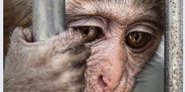 Сім причин, чому необхідно заборонити виступи тварин у цирку. ВІДЕО