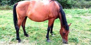 На Прикарпатті створять центр з відтворення гуцульської породи коней та іпотерапії