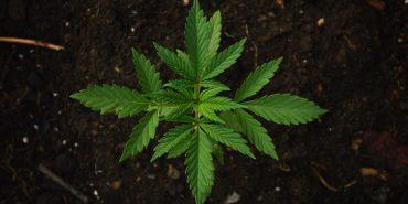 На Коломийщині, у підозрюваного в крадіжці, під час обшуку виявили наркотики