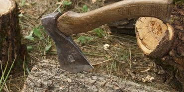 Прикарпатського майстра лісу, який незаконно рубав і продавав ліс, посадили в тюрму