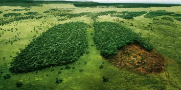 """Всесвітній фонд природи шукає координаторів """"Лісової варти"""" на Прикарпатті"""
