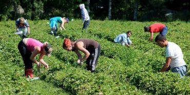 Зниклі у Фінляндії українці вже знайшлися – МЗС