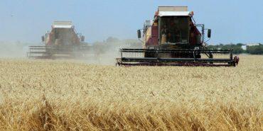Івано-Франківщина увійшла в топ-5 областей з найвищою врожайністю