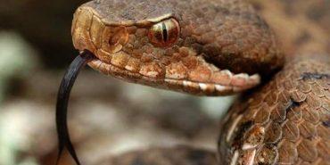 На Прикарпатті 21-річного хлопця вкусила змія