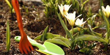 На Прикарпатті вперше відбудеться Фестиваль рослин, квітів та ландшафту