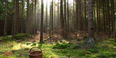 У лісі на Прикарпатті знайшли тіло жінки, яку рідні розшукували майже рік