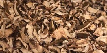 Прикарпатці змайстрували сушарку на дровах, в якій можна одночасно висушити тонну грибів. ФОТО