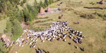 З висоти пташиного польоту показали повернення вівчарів з карпатських полонин. ФОТО