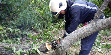 На Верховинщині дерево впало на школу та житловий будинок