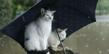 На Прикарпатті очікуються дощі та грози