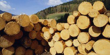 Прикарпатські деревообробники заявили про нечесний аукціон з електронних торгів на деревину