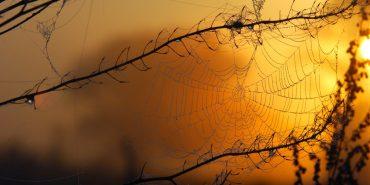 Синоптики спрогнозували погоду на осінь: коротке бабине літо і заморозки