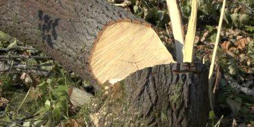 Прикарпатець незаконно зрубав ліс і продав його односельцю