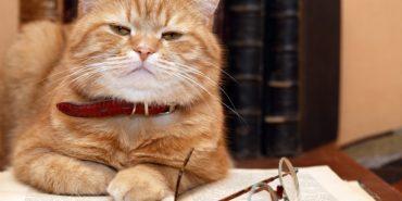Коти-рідини, ліки від хропіння та відраза до сиру: стали відомі переможці 27-ї Шнобелівської премії