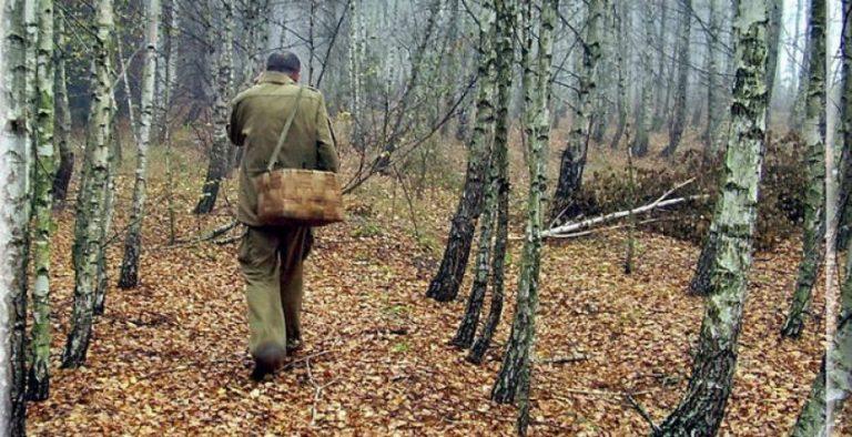 На Верховинщині 13 людей пішли по гриби і заблукали - їх шукали декілька годин